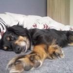 Daisy w domu (4)