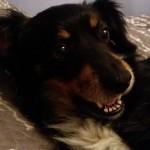 Daisy w domu (7)