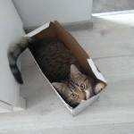 Roni w nowym domu (1)
