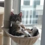 Roni w nowym domu (2)