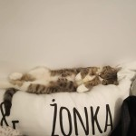 Roni w nowym domu (7)
