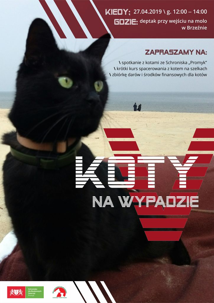 koty_plakat