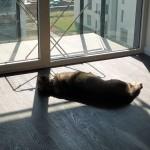 Saba w nowym domu (2)