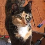 Phoebe w nowym domu (1)