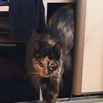 Phoebe w nowym domu (3)