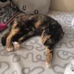 Phoebe w nowym domu (4)