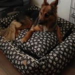 Rita w nowym domu (3)