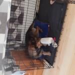 Sylwek w nowym domu (2)
