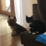 Franek w nowym domu (3)
