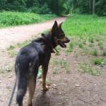 Pierwszy spacer w lesie