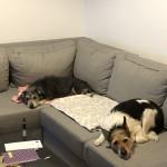 Niunia w nowym domu (2)