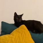 Bella w nowym domu (1)
