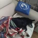 Mietek w nowym domu (4)