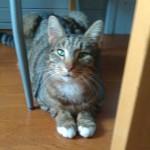 Rudi (2).