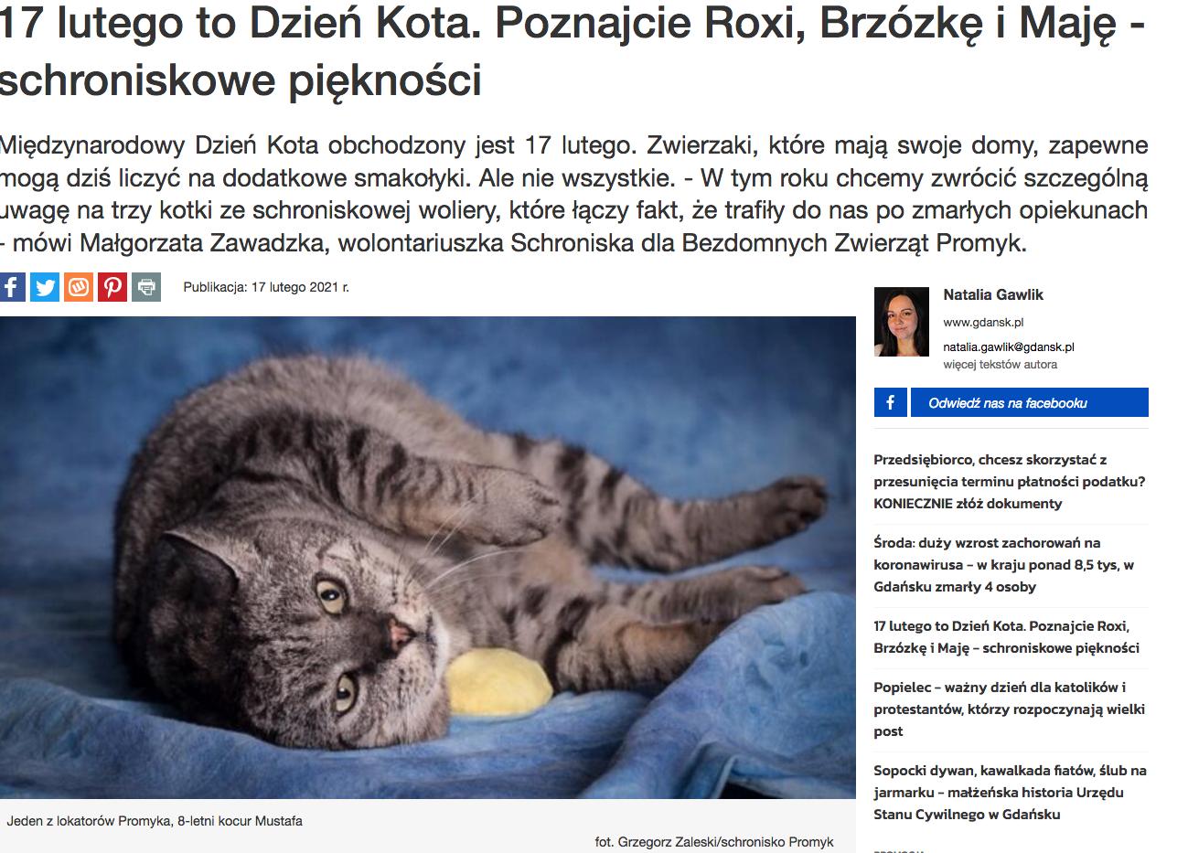 Screenshot_2021-02-17 17 lutego to Dzień Kota Poznajcie Roxi, Brzózkę i Maję - schroniskowe piękności