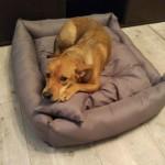 Luna w nowym domu (4)