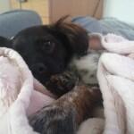 Lulu w nowym domu (4)