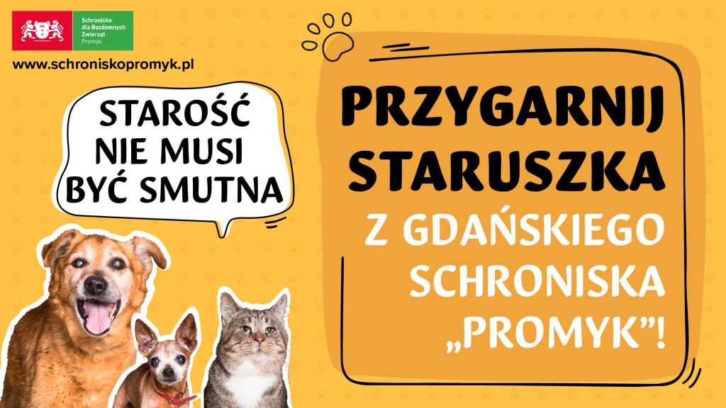 Plansza_schronisko-01(1)
